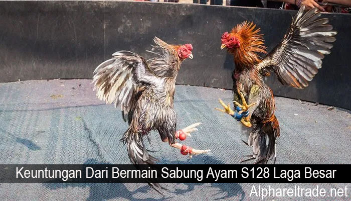 Keuntungan Dari Bermain Sabung Ayam S128 Laga Besar
