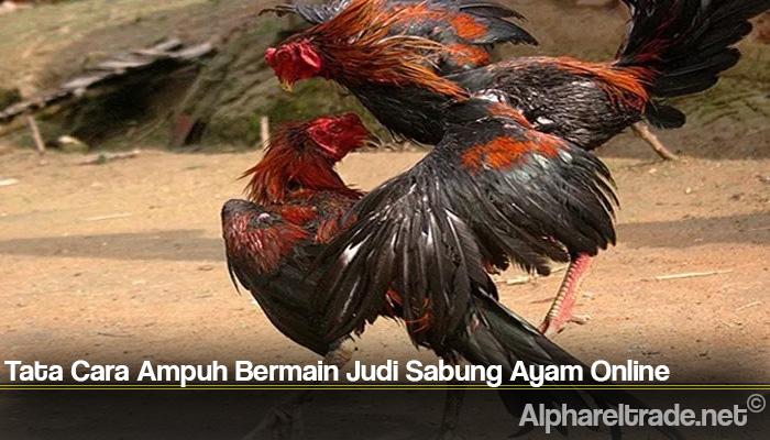 Tata Cara Ampuh Bermain Judi Sabung Ayam Online